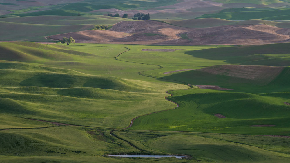 Stream flowing to Lone Tree, Palouse (WA)