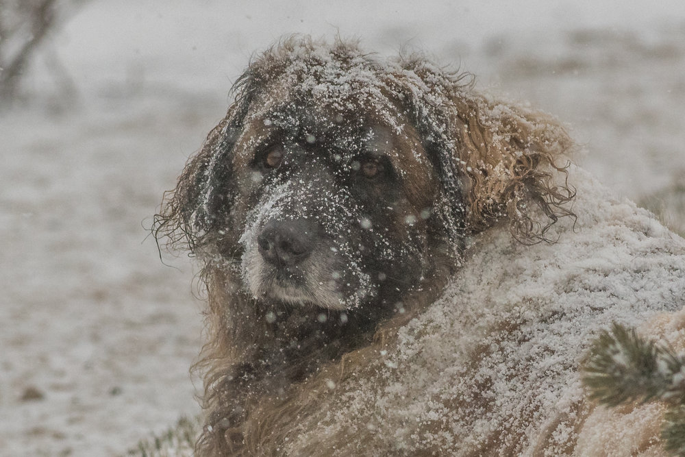 Snow dog days