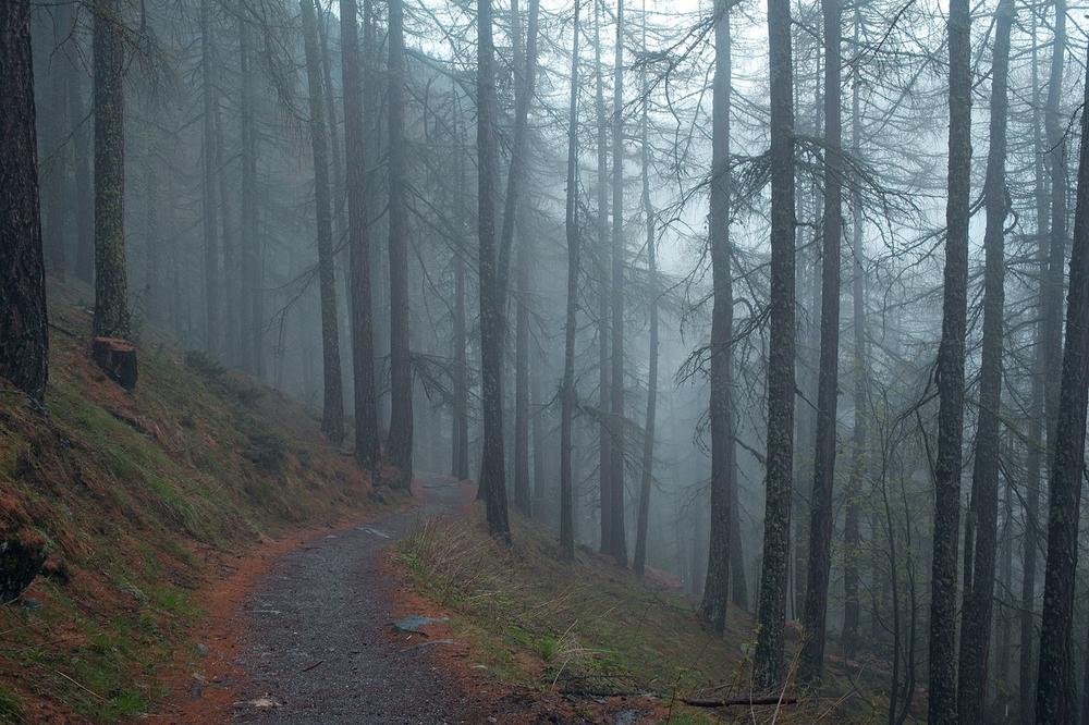 você sorri movendo quase nada e antecipa a velha longa estrada e os teus galhos vão me arborizando nu