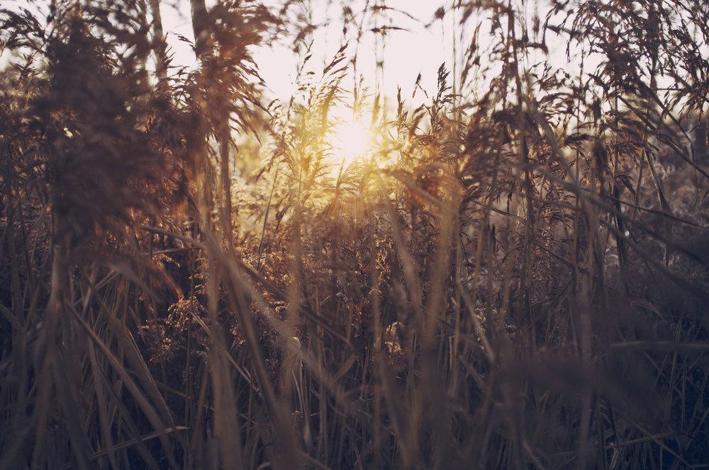 amigo, o que mais eu posso te dizer, a luz que nasce em mim vem de você.
