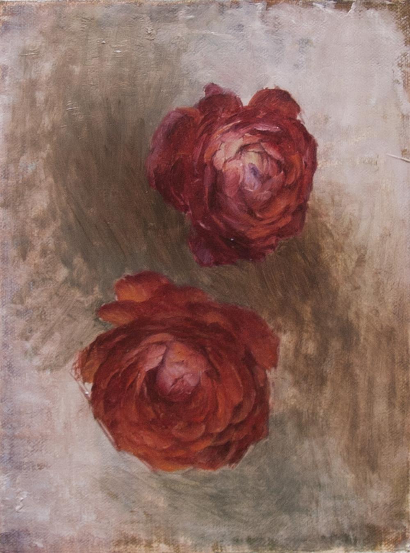 Ranunculus Flowers Study