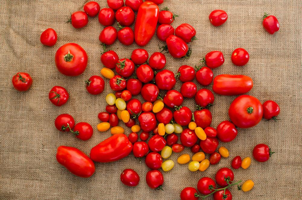 Many varieties of tomato