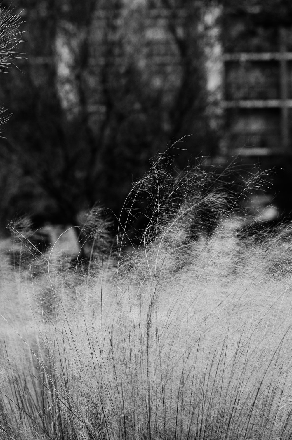 Grass in the wind, San Antonio