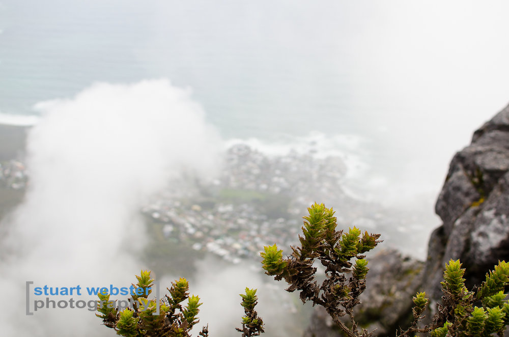 South Africa 2013 (48 of 97).jpg