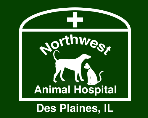 Northwest Animal Hospital