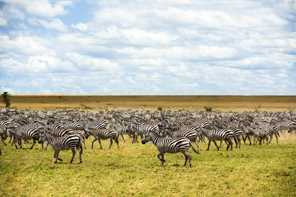 Tanzania-Earth-Photo-By-Tricia-Suriani-Ramsay-2.jpg