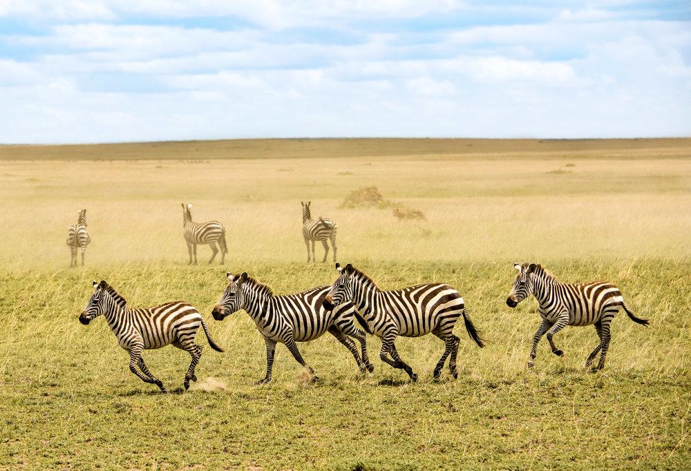 Tanzania-Earth-Photo-By-Tricia-Suriani-Ramsay-4.jpg