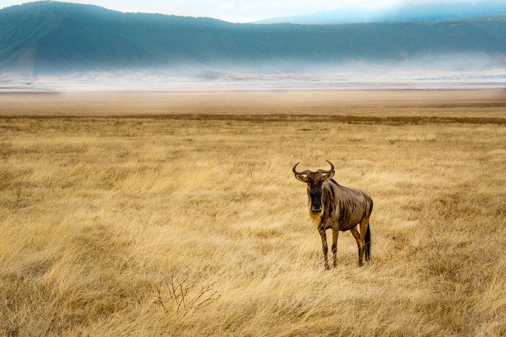 Tanzania-Earth-Photo-By-Tricia-Suriani-Ramsay-8.jpg