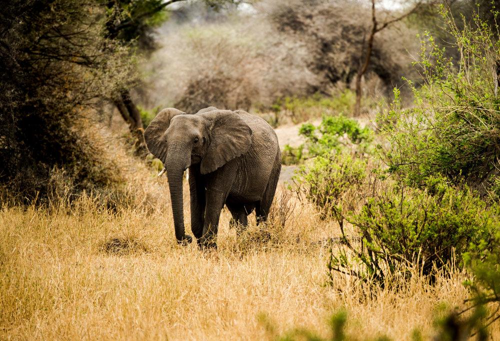 Tanzania-Earth-Photo-By-Tricia-Suriani-Ramsay-10.jpg