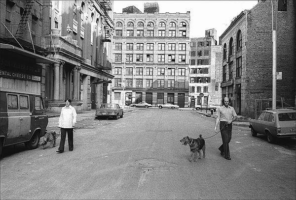 dogwalk_std.jpg