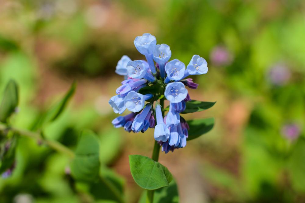 BlueBellBee-53.jpg