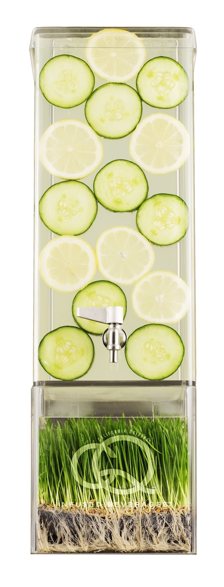 CQ Lemon Cucumber Infuses Water