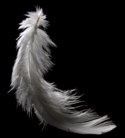 Feather-web.png