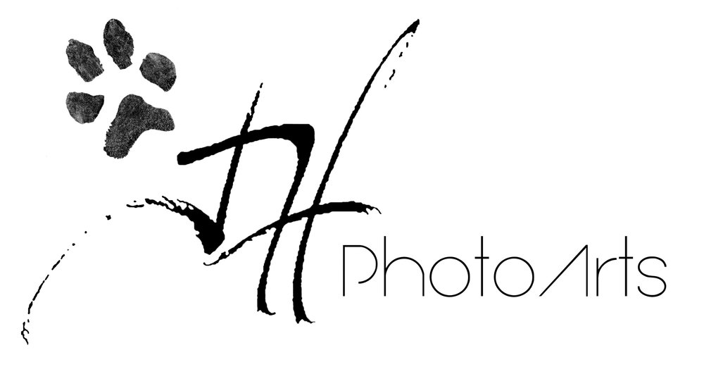 jhphotoarts arualXL paw.jpg