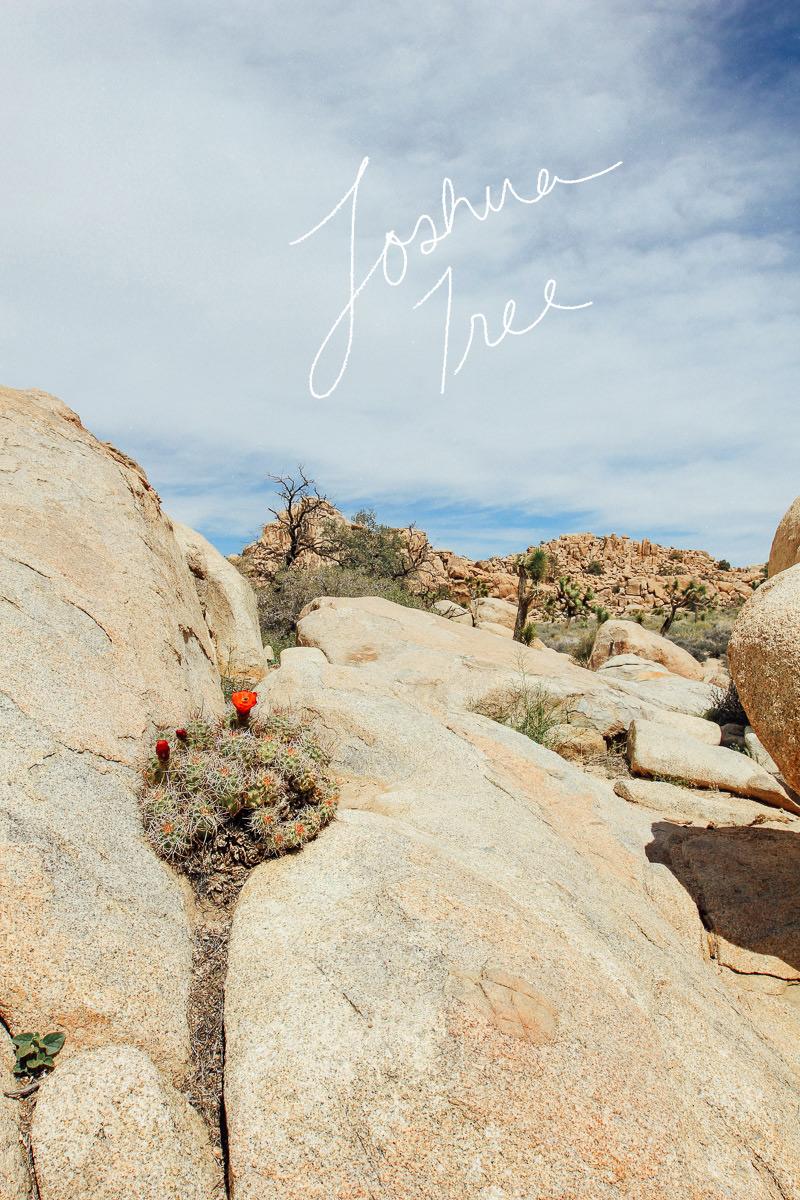 Joshua Tree | StyleComb