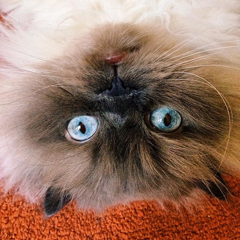 Jen Mussari's awesome cat, Winston | DesignComb