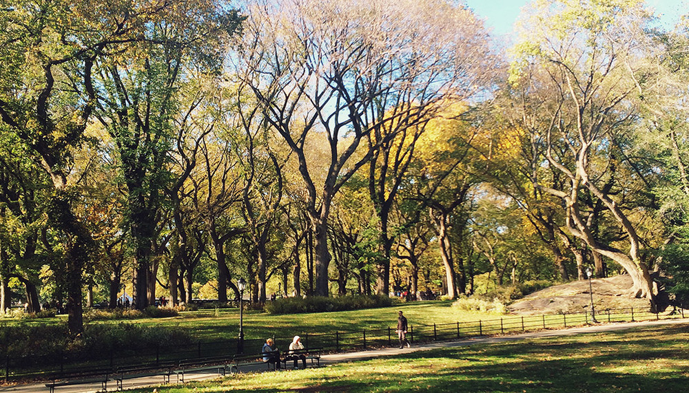 Central Park at Fall | DesignComb