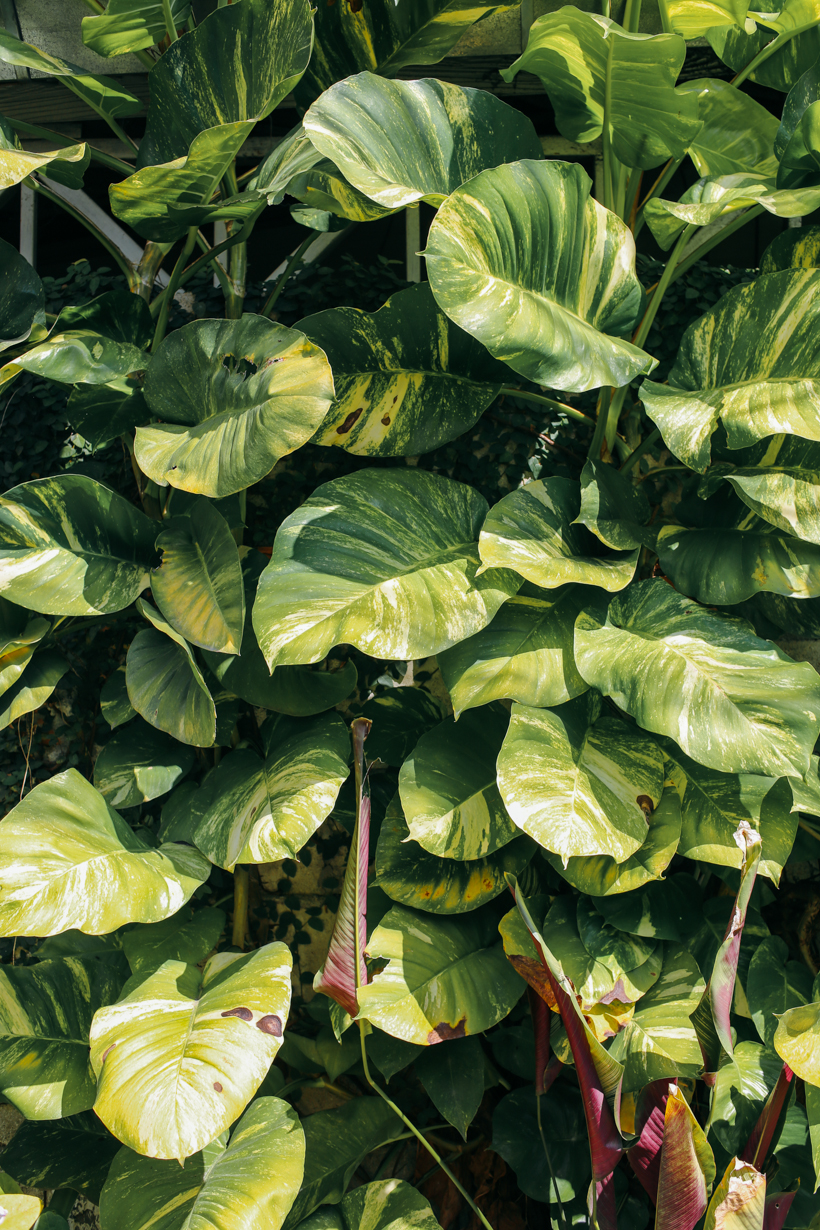 Plants in Chiang Mai Thailand | DesignComb