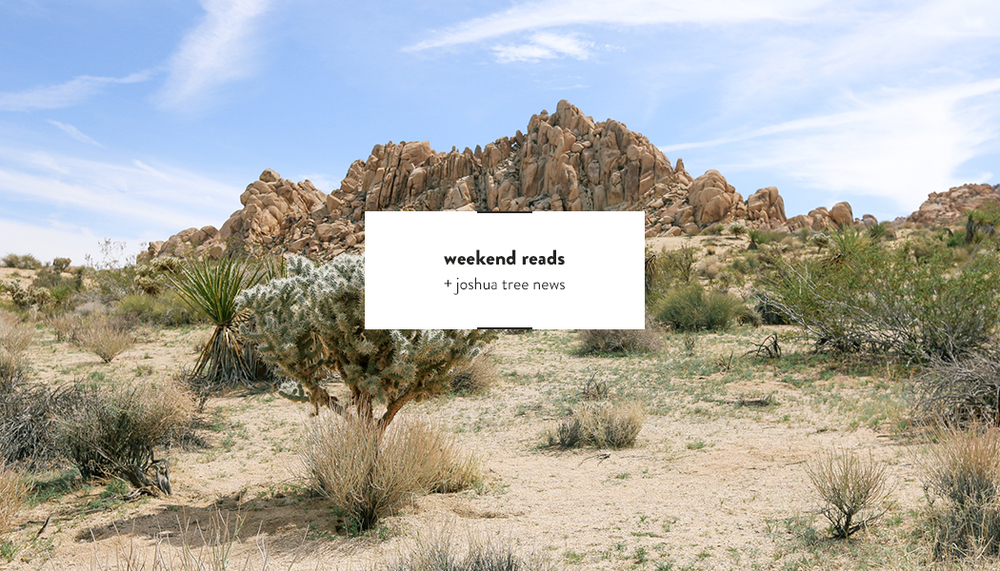 Weekend Reads Joshua Tree | DesignComb