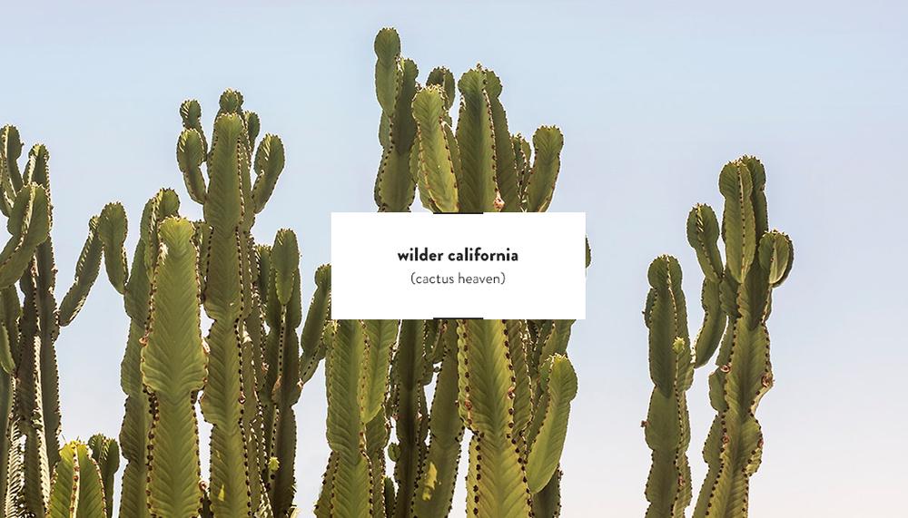Wilder California Prints | DesignComb