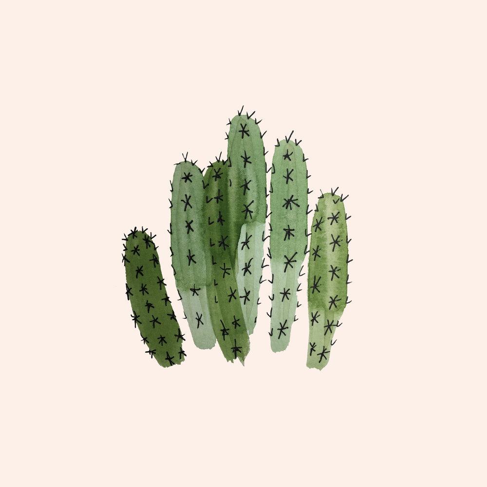 Dagger Cactus