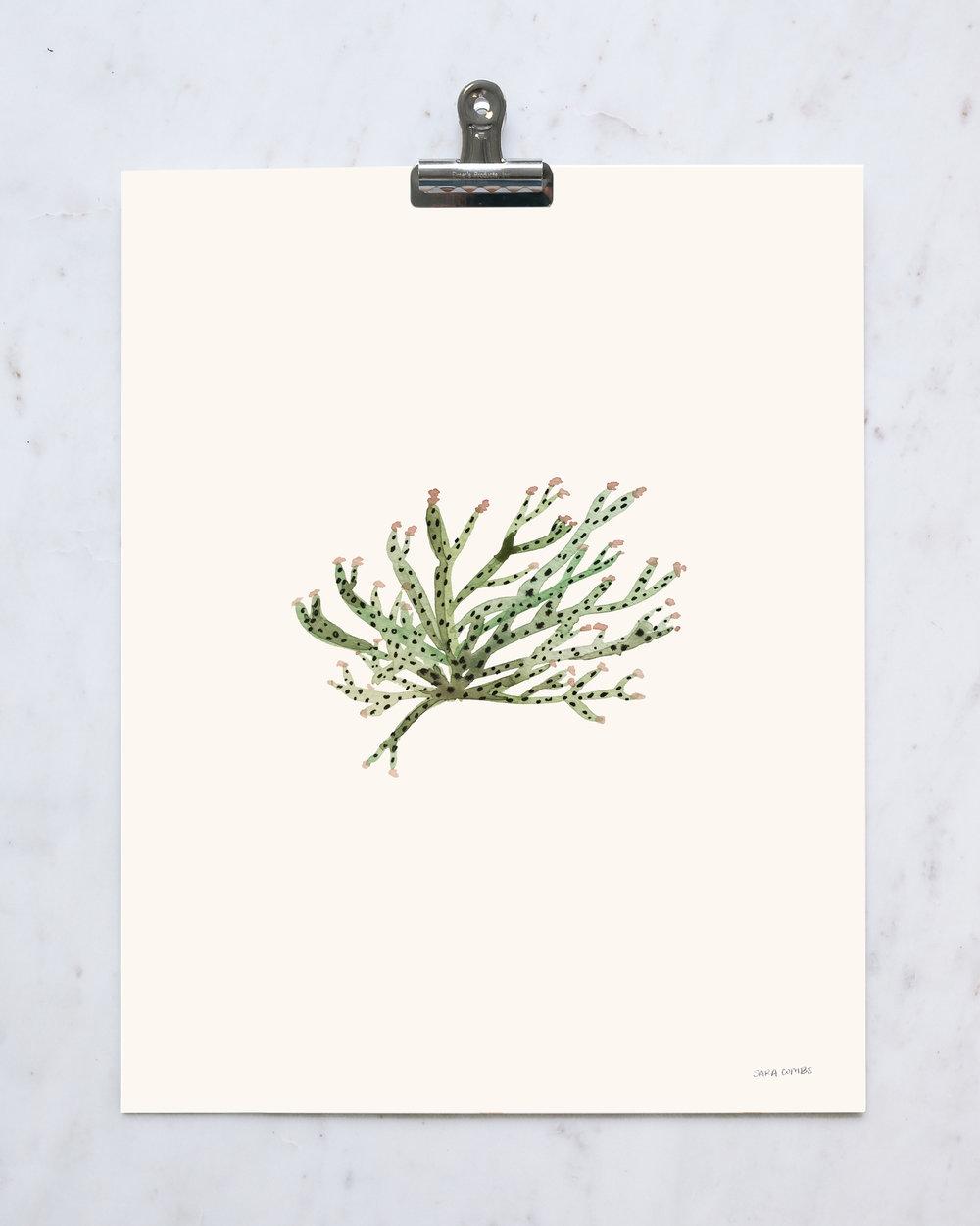 "Buckhorn Cactus 11x14"" print"