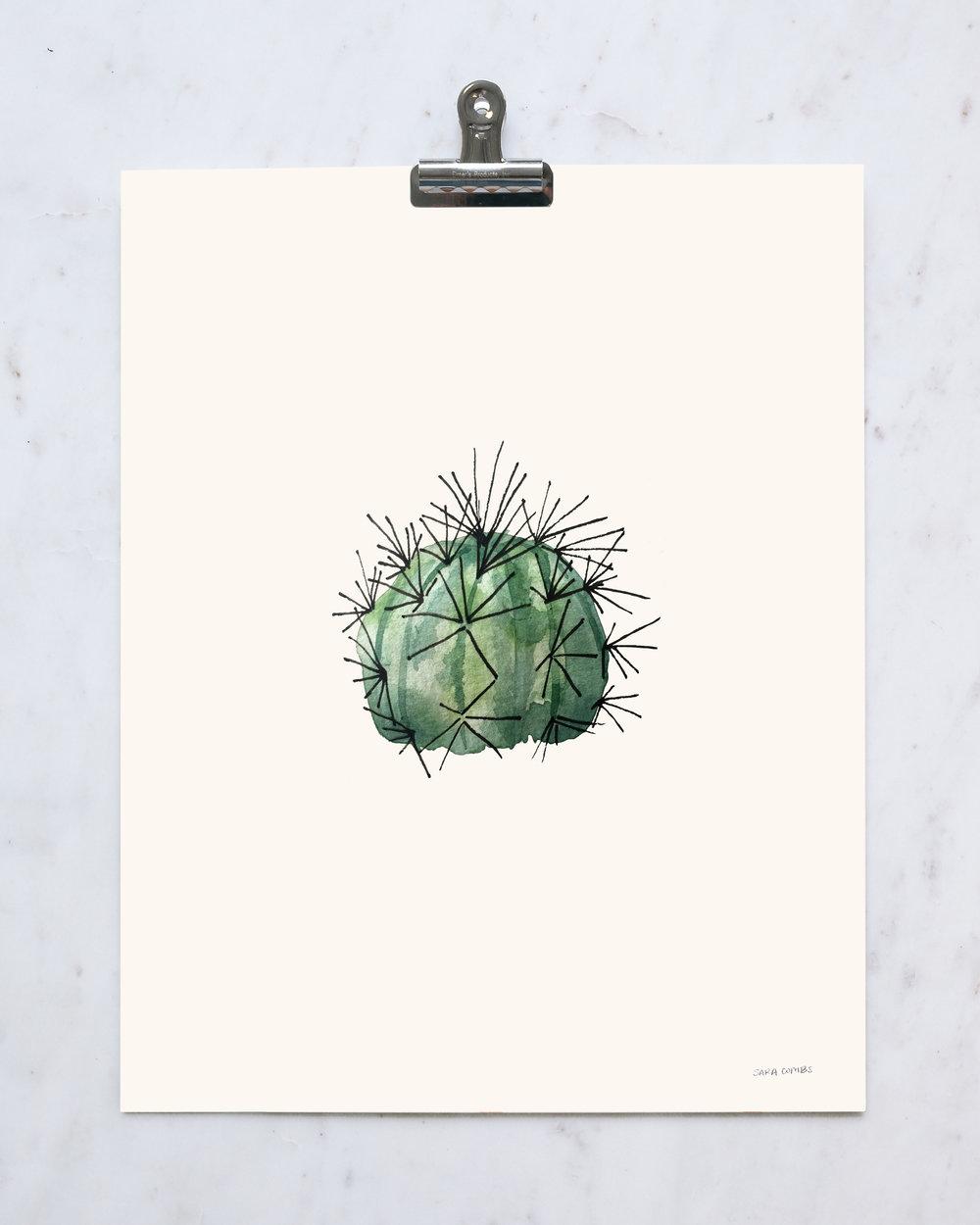 "Melon Cactus 11x14"" print"
