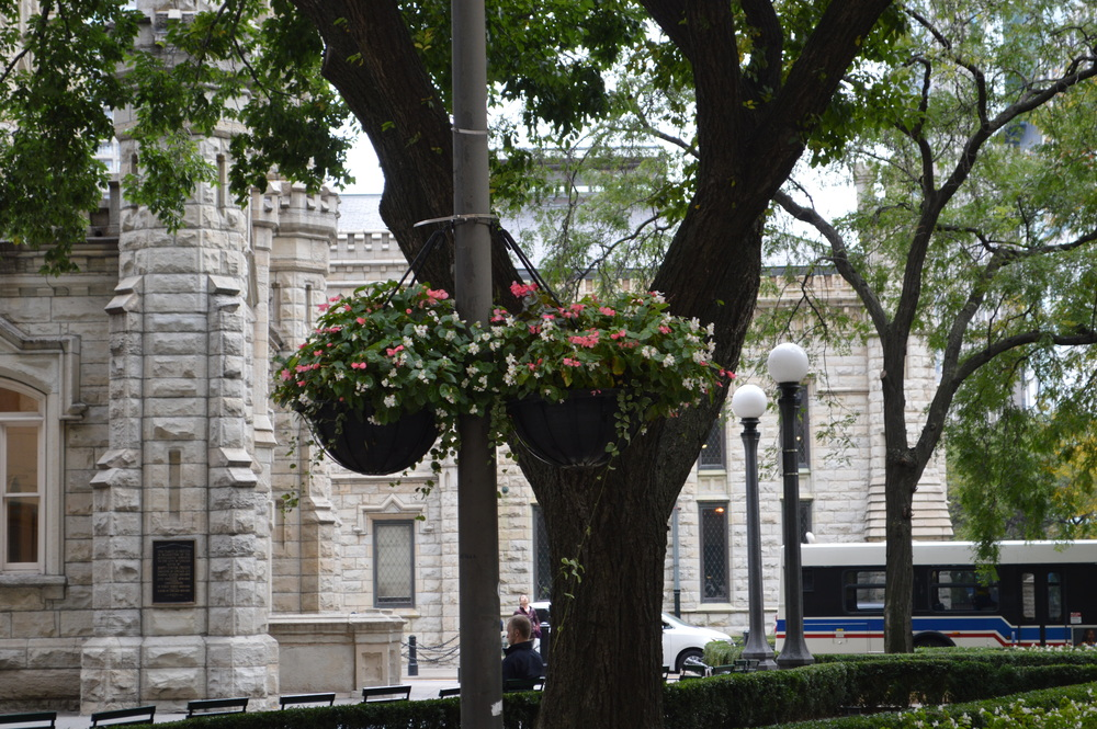 Chicago Hanging Baskets