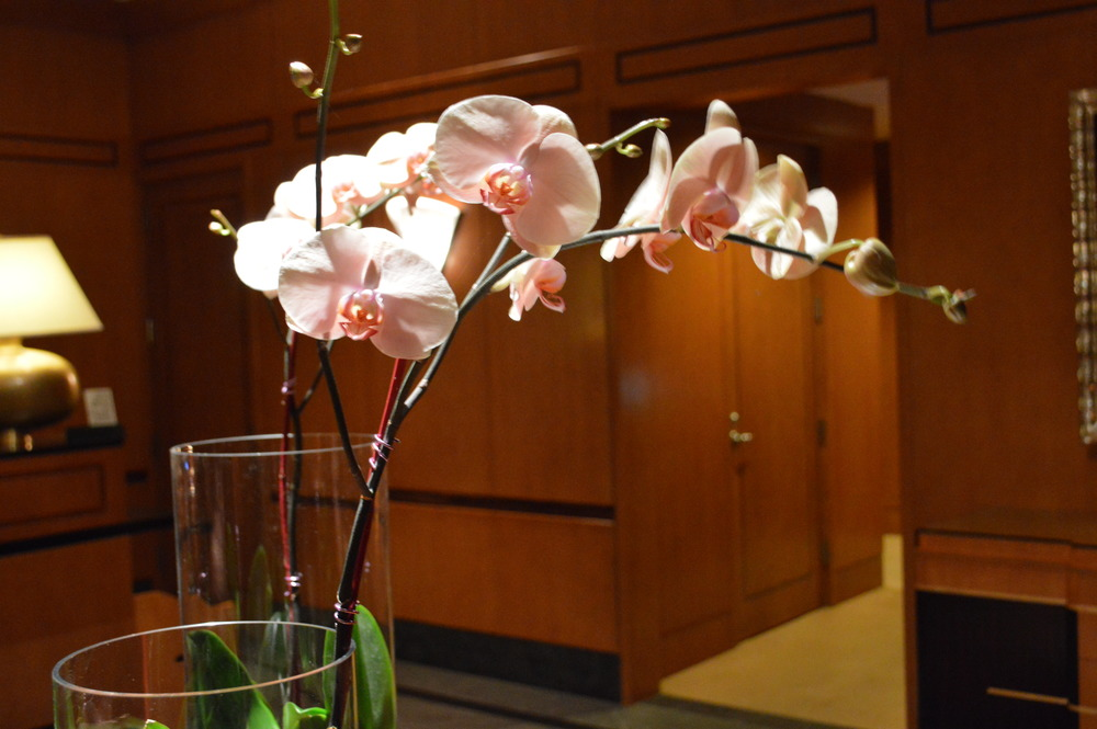 Orchids Close Up