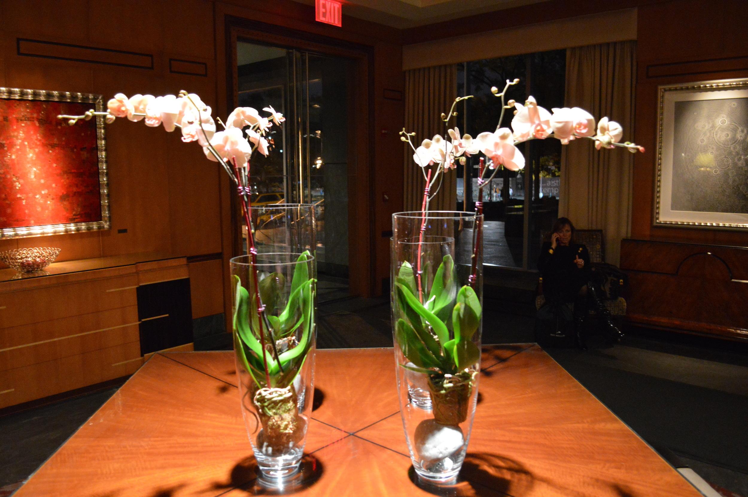 Ritz Carlton Orchids