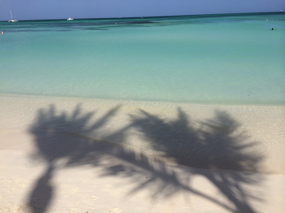 Aruba-Beach-PalmTrees.jpg