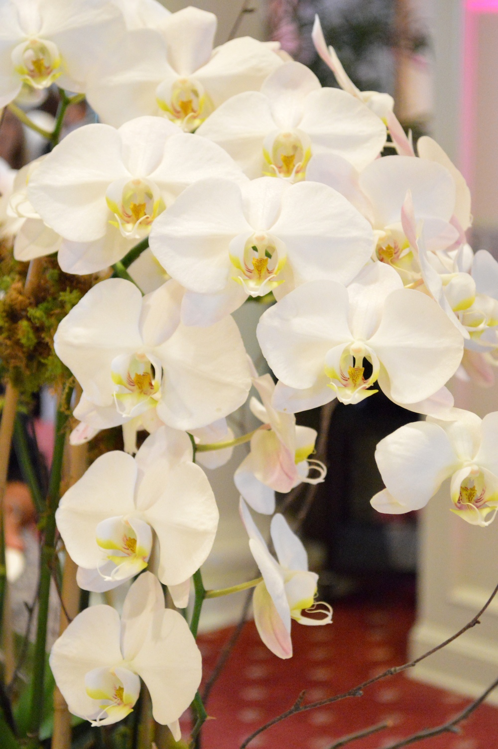 LaurenSchwaiger-Blog-Ballantyne-Hotel-Orchid.jpg