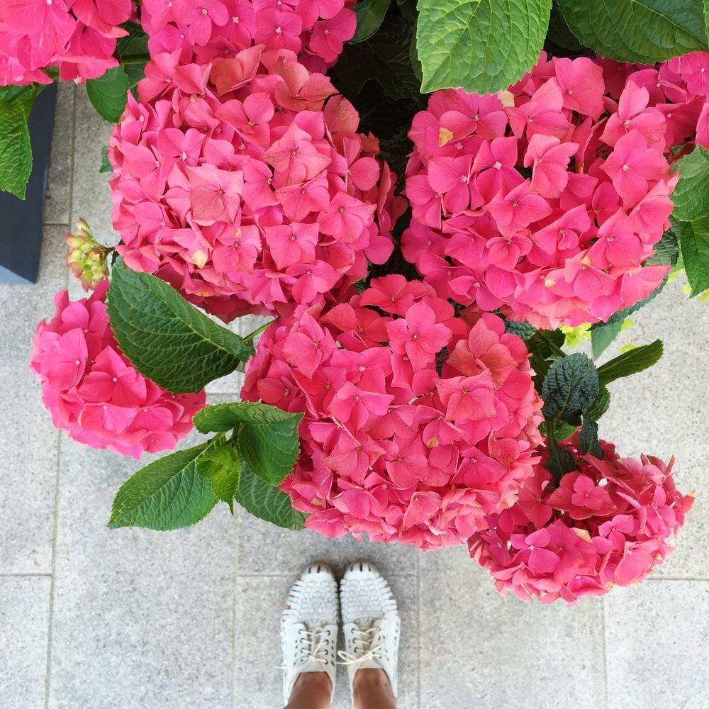 LaurenSchwaiger-Travel-Blog-Austria-Achensee-Strand-Hotel-Pink-Hydrangeas.jpg