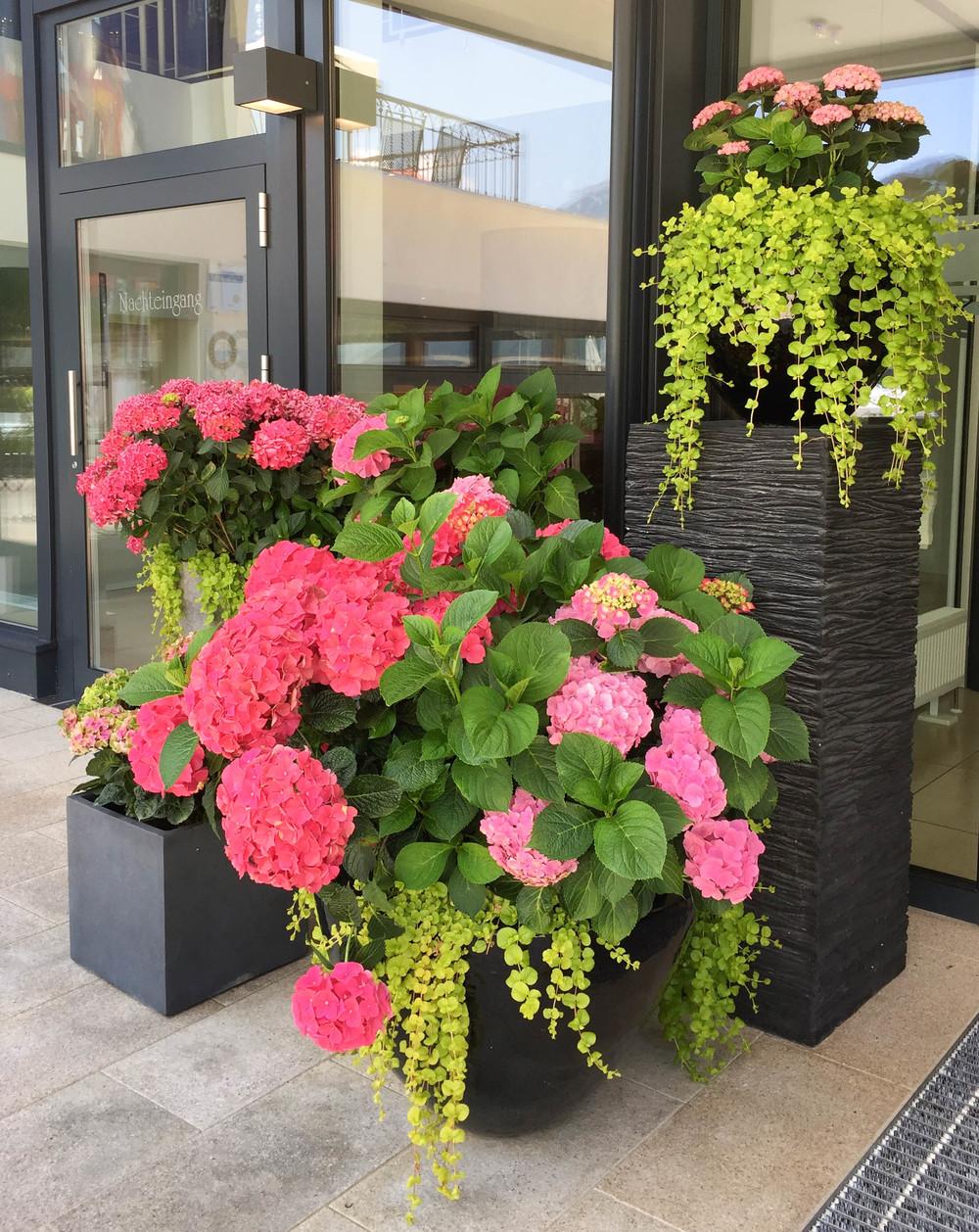 LaurenSchwaiger-Travel-Blog-Achensee-Austria-Strand-Hotel-Pink-Hygrangeas.jpg