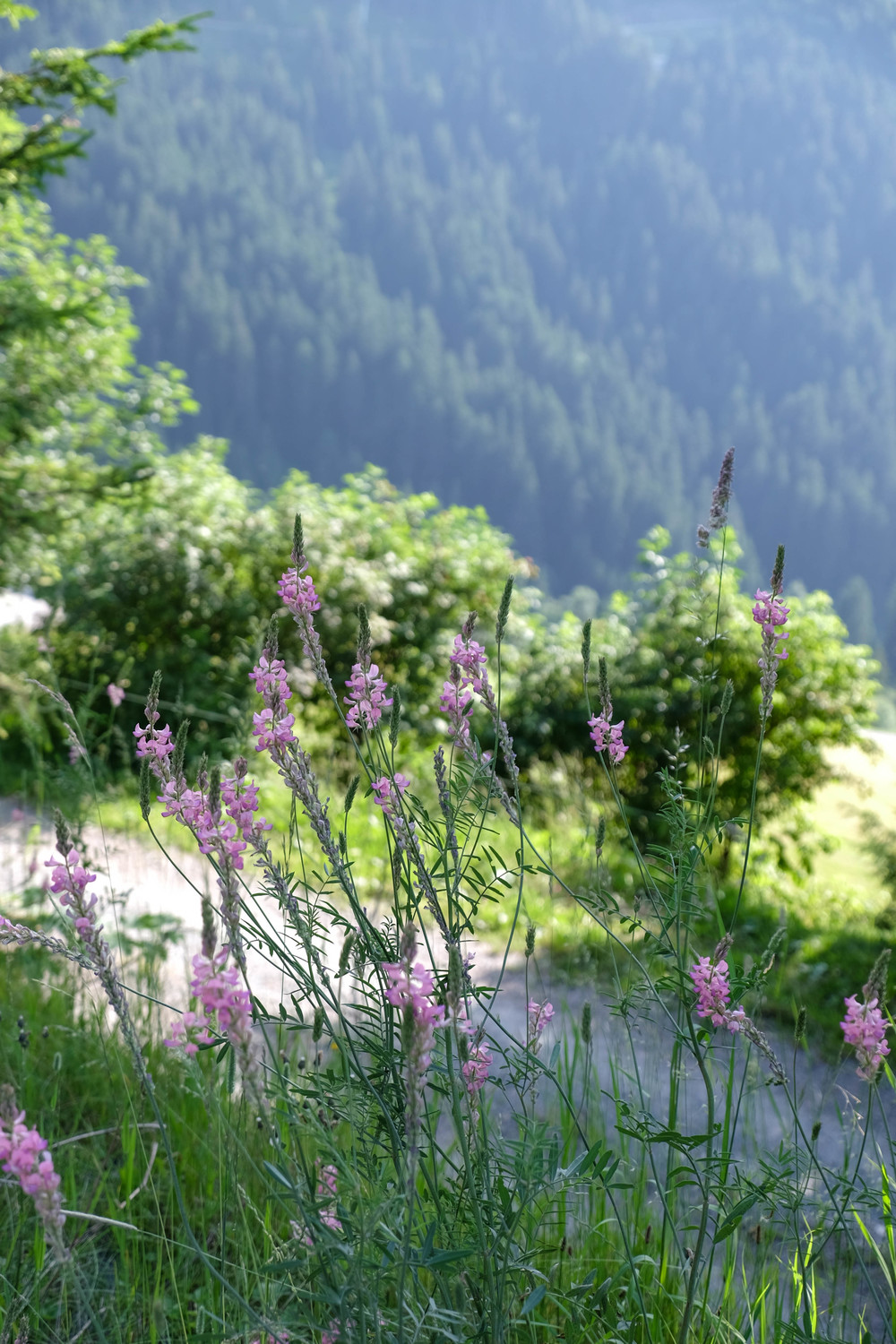 LaurenSchwaiger-Travel-Blog-Austria-Kitzbuhel-Alps-Flowers.jpg