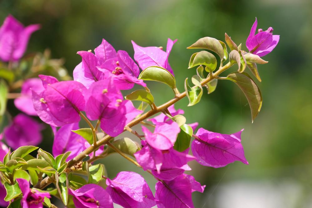 LaurenSchwaiger-Travel-Blog-Mallorca-Spain-Flowers.jpg