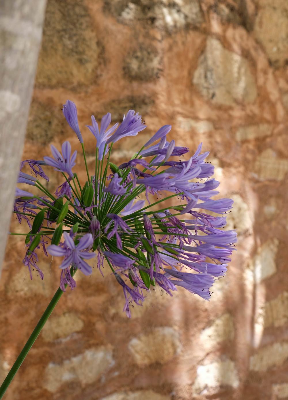 LaurenSchwaiger-Travel-Blog-Mallorca-Spain-Hotel-Predi-Son-Jaumell-Flowers.jpg
