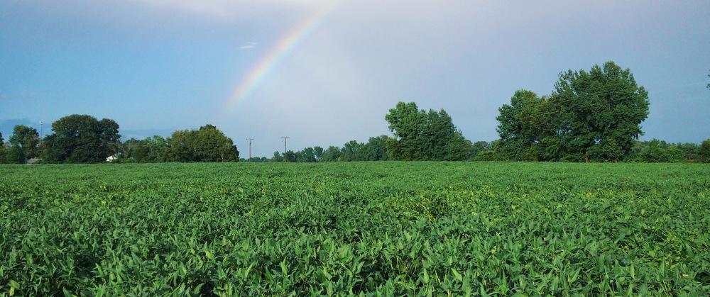 LaurenSchwaiger-Life-Style-Blog-Charlottesville-VA-Rainbow.jpg