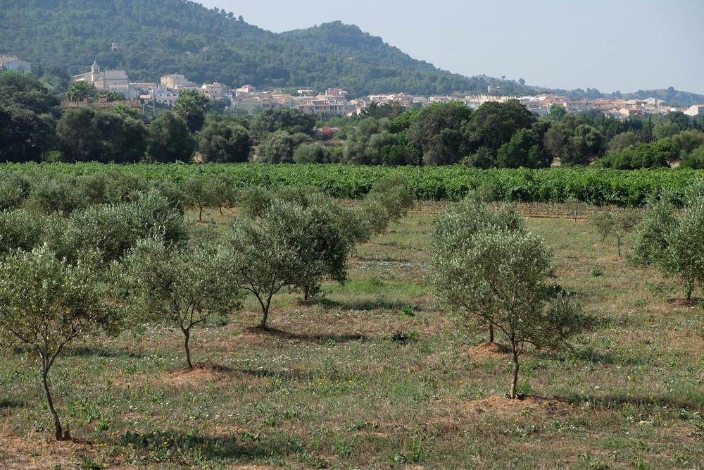 LaurenSchwaiger-life-style-travel-blog-pred-son-jaumell-olive-farm.jpg
