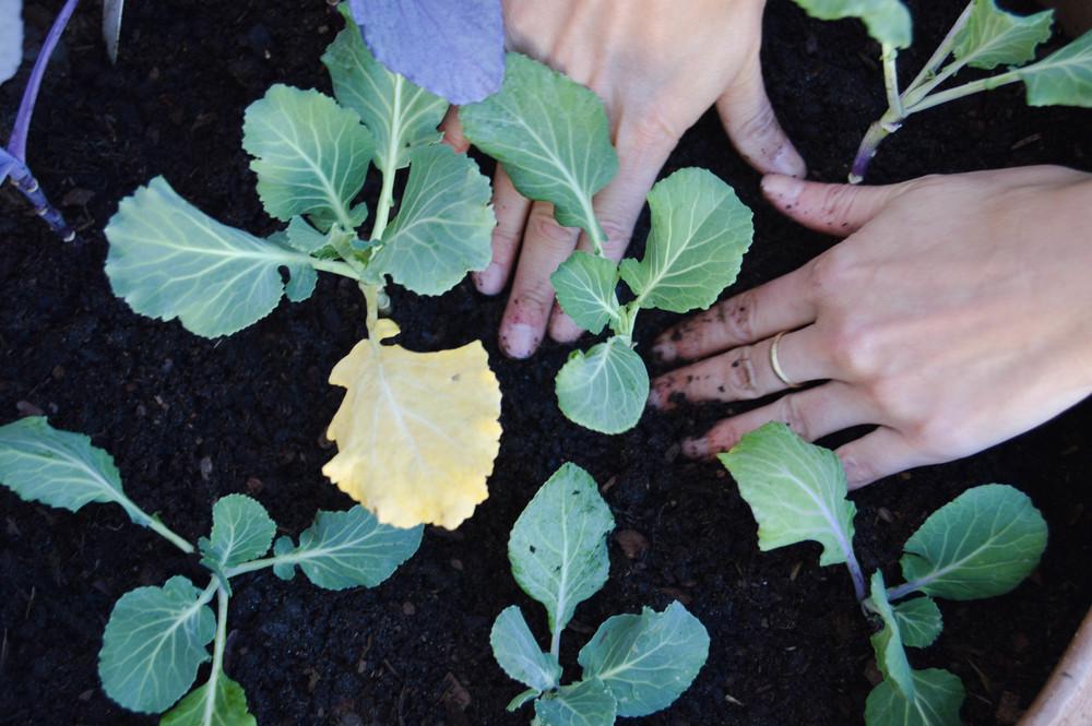 LaurenSchwaiger-Healthy-life-style-blog-winter-garden.jpg