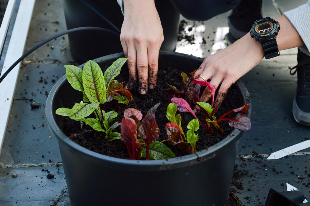 LaurenSchwaiger-Healthy-Life-Style-Blog-Winter-Veggie-Garden.jpg