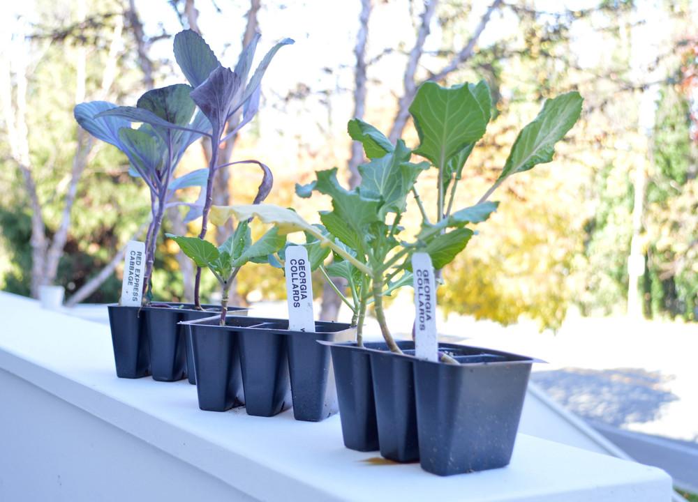 LaurenSchwaiger-Healthy-Life-Style-Blog-Winter-Garden-Green.jpg