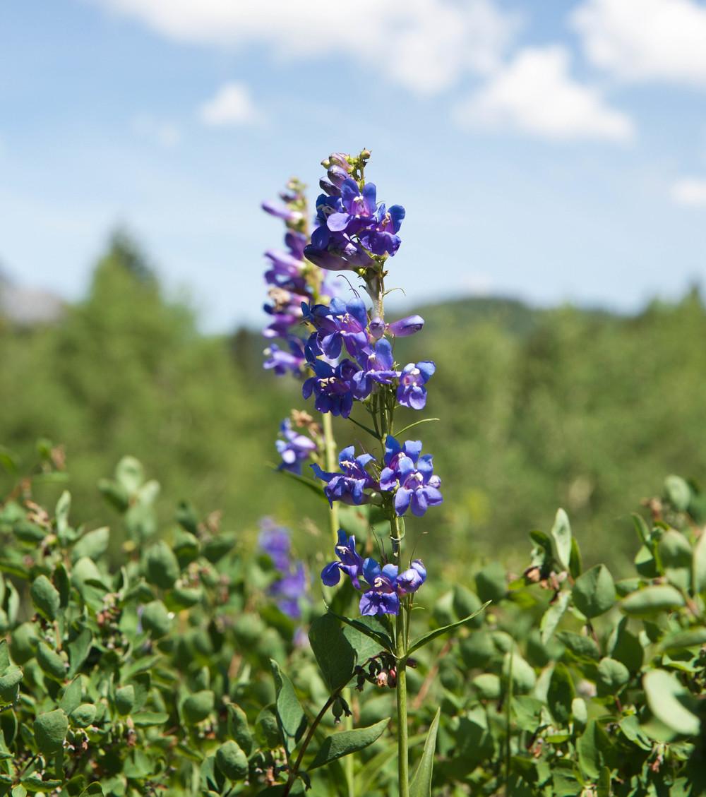 utah-wildflowers-laurenschwaiger-travel-blog.jpg