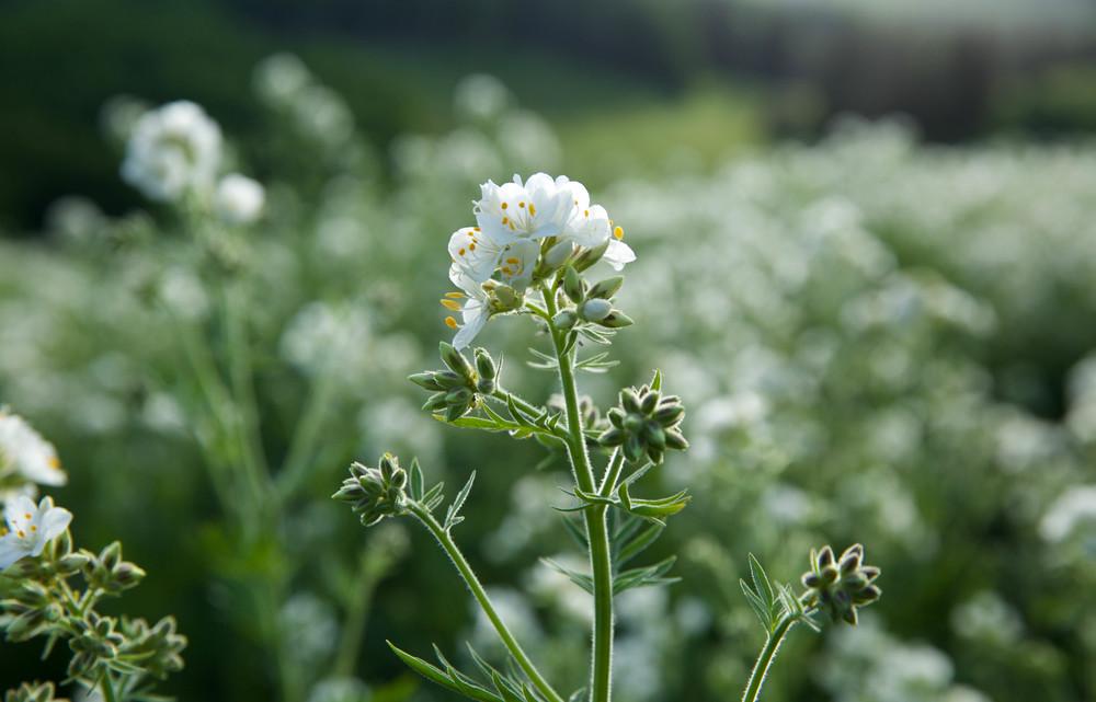 Wildflowers-Utah-LaurenSchwaiger-Lifestyle-travel-Blog.jpg