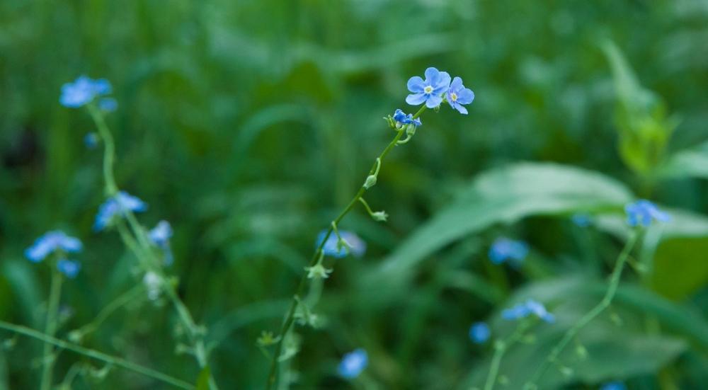 Deer-Valley-Utah-Wild-Flowers-laurenSchwaiger-Travel-Blog.jpg