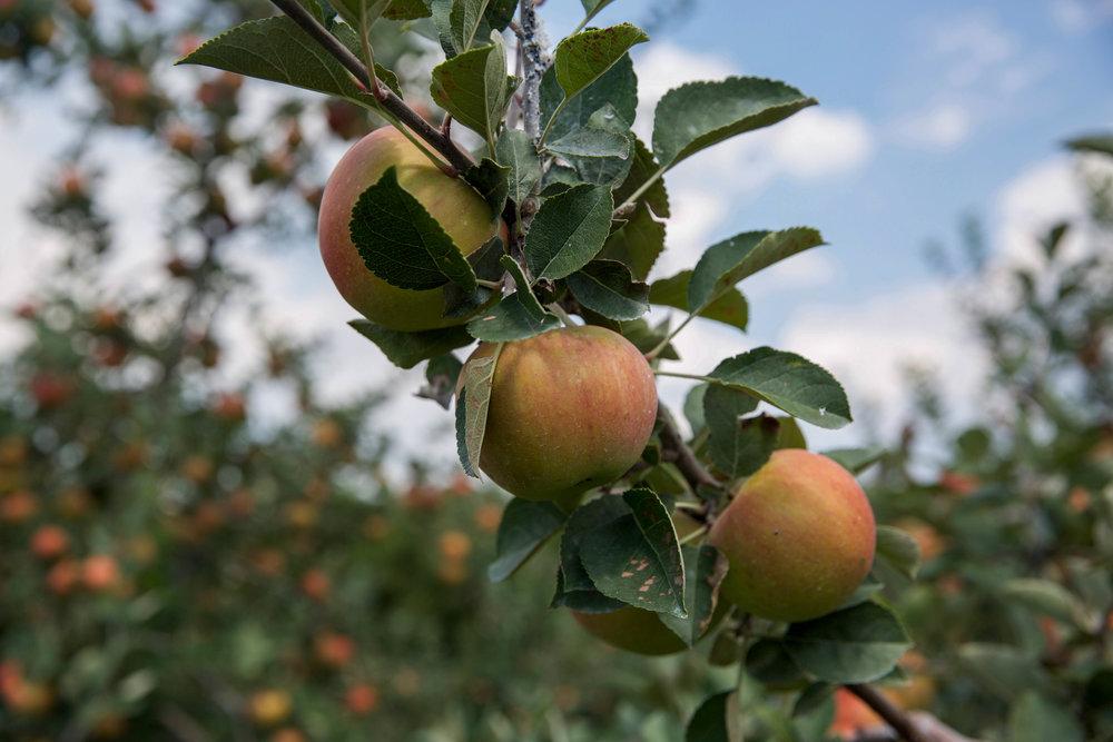 Grandad's-Apples-Hendersonville-NC-LaurenSchwaiger-Lifestyle-Blog.jpg