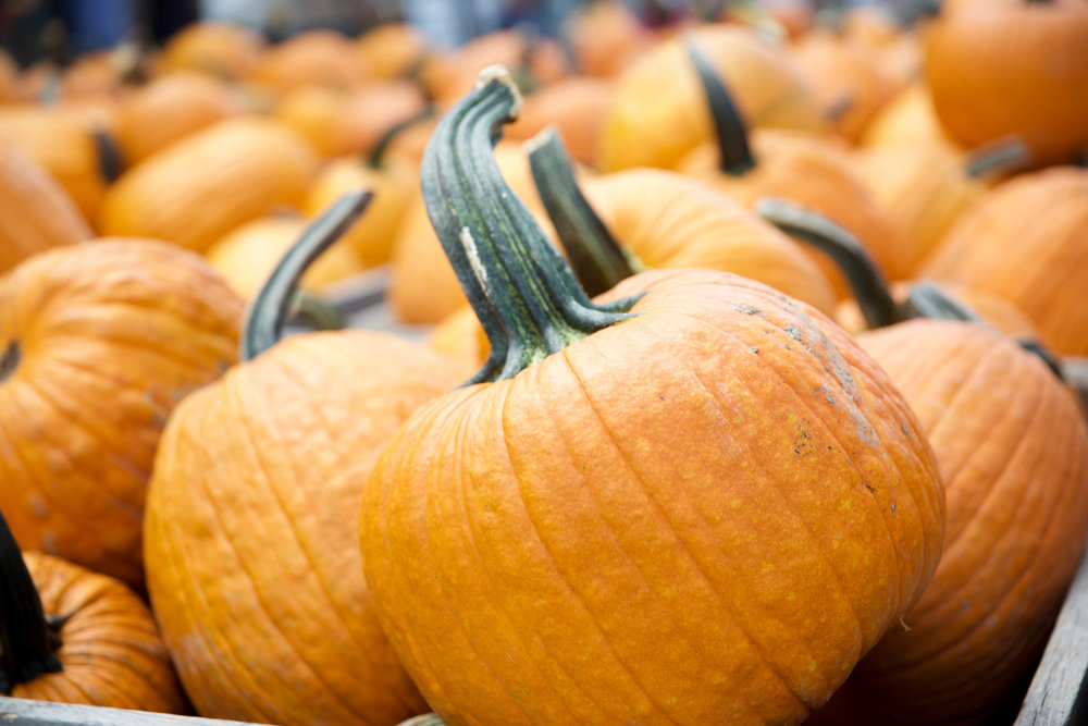 LaurenSchwaiger-Lifestyle-Blog-Autumn-Pumpkins.jpg