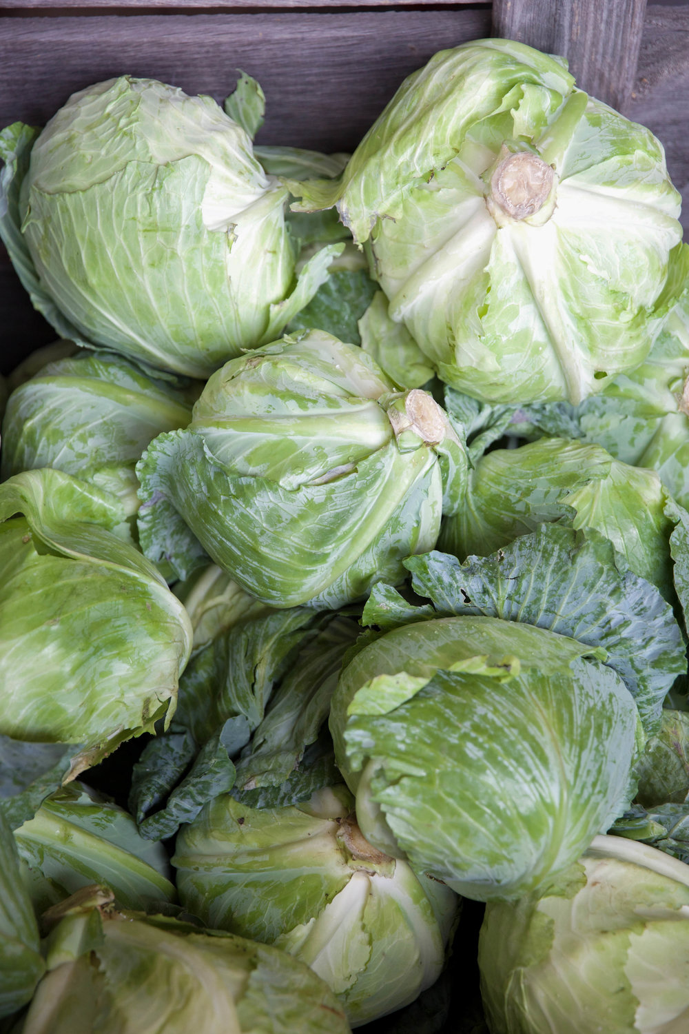 cabbage-fall-foods-laurenschwaiger-lifestyle-blog.jpg