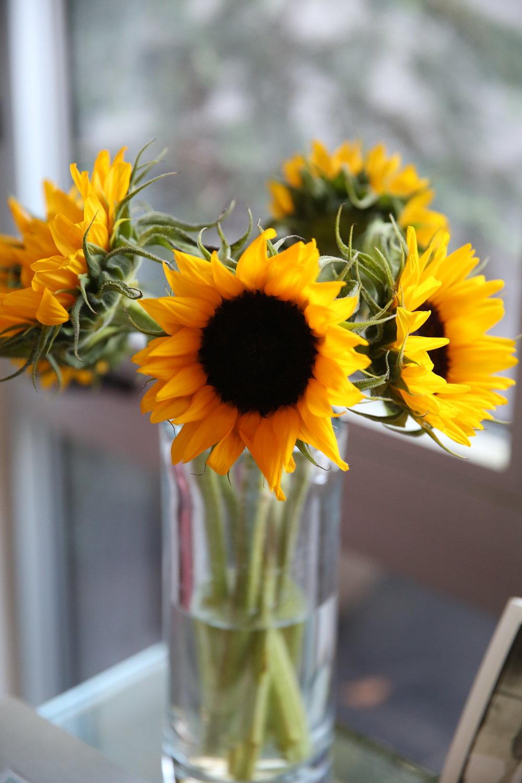 sunflowers-around-the-house-lauren-schwaiger-blog.jpg