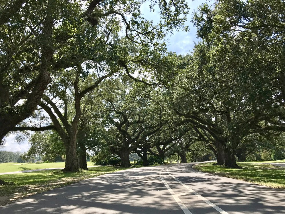 audubon-park-new-orleans-lauren-schwaiger-lifestyle-blog.jpg